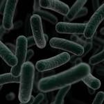 bacteria-150x150