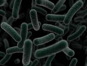 bacteria-300x228